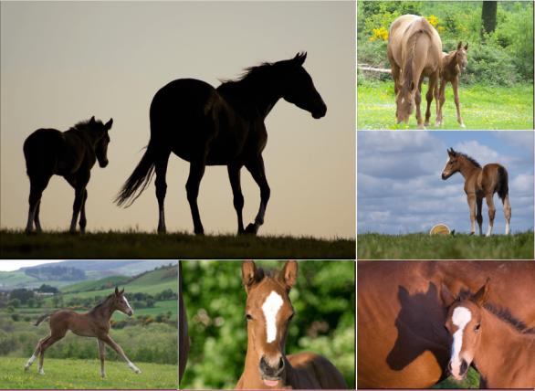 Cute Baby Horses!